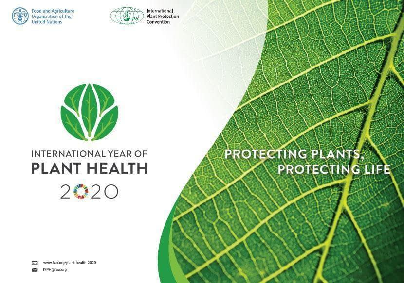 , Celebrating the FAO International Year of Plant Health: A forward looking perspective on tackling the grand challenges in plant health to transform agriculture sustainably. | CambPlants Hub, TheCircularEconomy.com