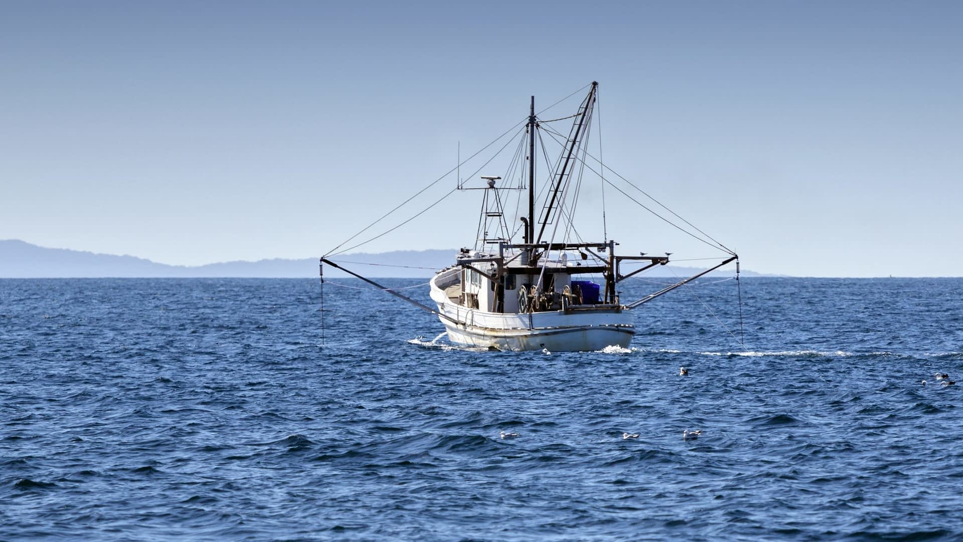 , 'Unprecedented internationally': Australian seafood given sustainability tick for seventh consecutive year – Seafood Industry Australia, TheCircularEconomy.com