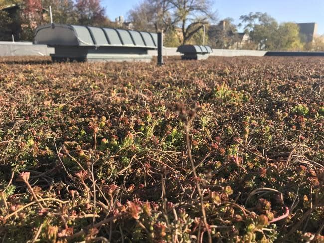 , GRCC's new green roof reflects continued commitment to sustainability | Grand Rapids Community College, TheCircularEconomy.com