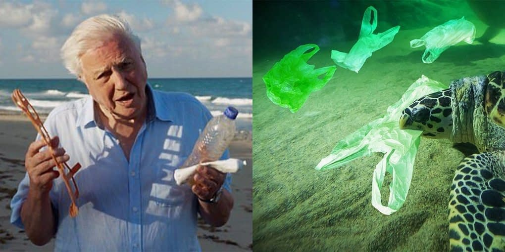 """, More People Than Ever Are Ditching Single Use Plastics Thanks To The """"Attenborough Effect"""", The Circular Economy"""