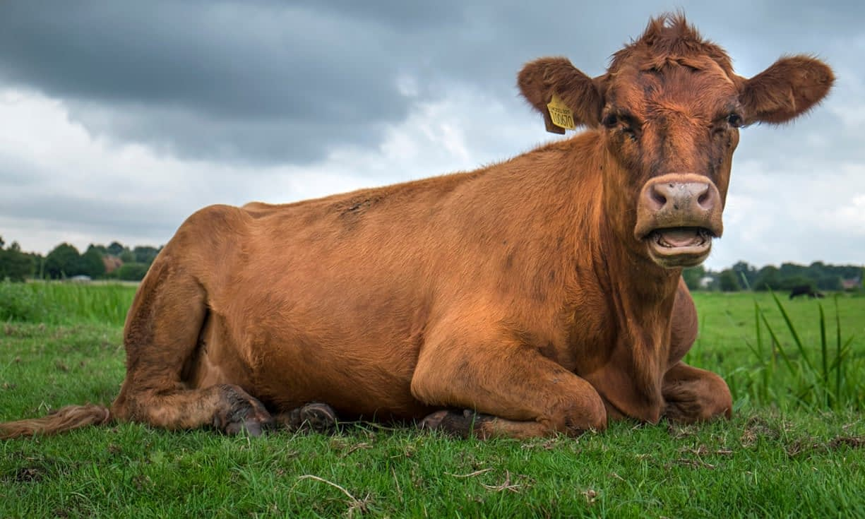 , Why George Monbiot is wrong: grazing livestock can save the world, The Circular Economy