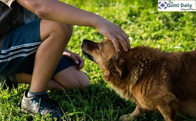 , Best Ways to Home Train Your Dog, TheCircularEconomy.com