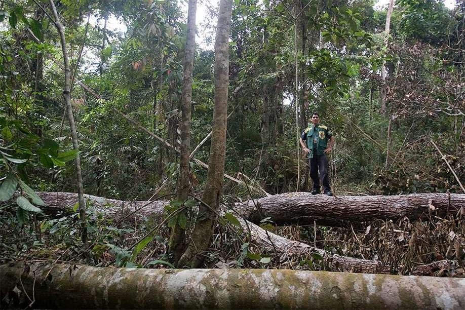 , Guest Article: Greening the Wood Industry: Sustainability from Production to Consumption, TheCircularEconomy.com