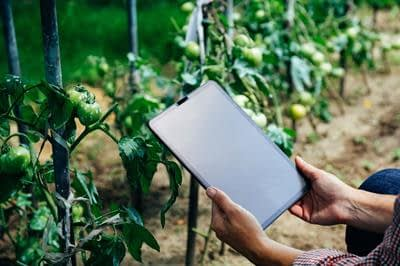 , Computer Science and Sustainable Food Systems: Making Informed Decisions through Data Governance and ICT Access from Farm to Fork in the Digital Era | Frontiers Research Topic, TheCircularEconomy.com