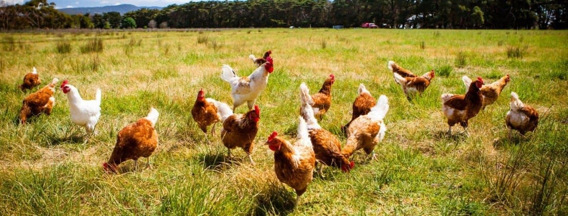 , The key to poultry sustainability, The Circular Economy