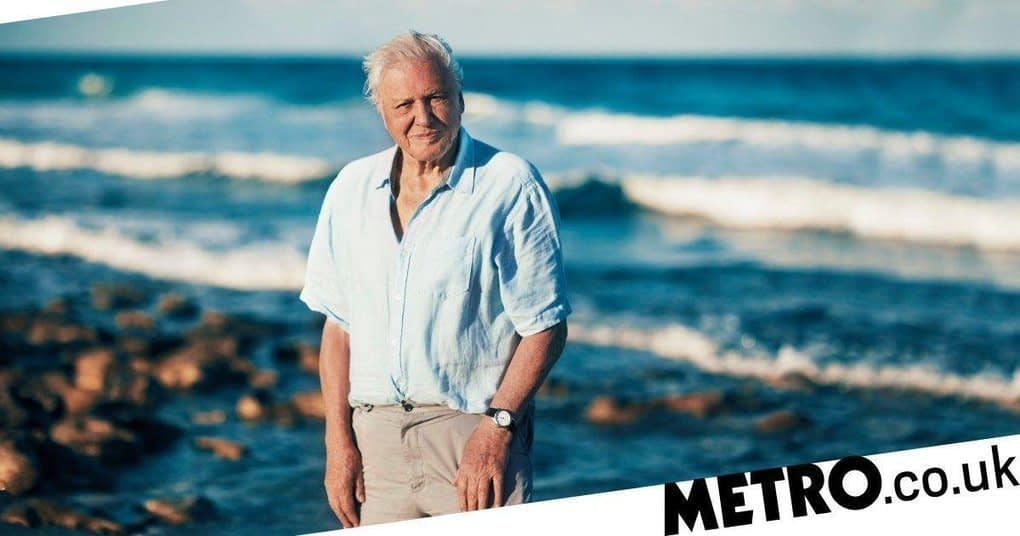 , 'Attenborough effect' leads to 53% drop in single use plastic in 12 months, The Circular Economy