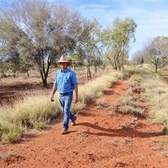 , Beef sustainability group backs tree cover accounting approach, TheCircularEconomy.com