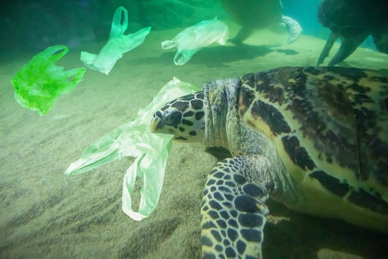 , New Zealand Becomes Another Country That Says No To Single-Use Plastic Bags, The Circular Economy