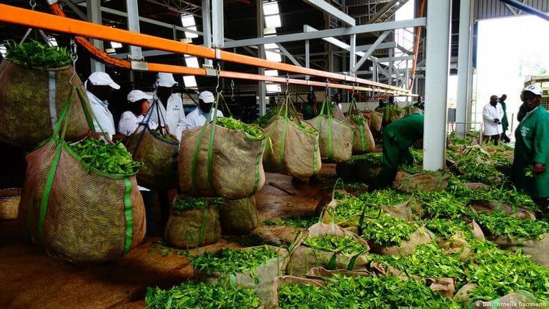 , Bioenergy in Kenya: Making tea production sustainable, The Circular Economy