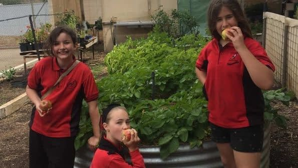 , Ditching single use-plastics at these SA schools has led to better health for students and the environment, The Circular Economy