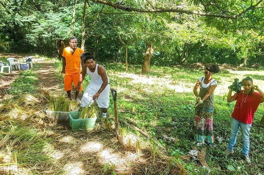, Vetiver Grass project spreads its roots into sustainability and conservation, TheCircularEconomy.com