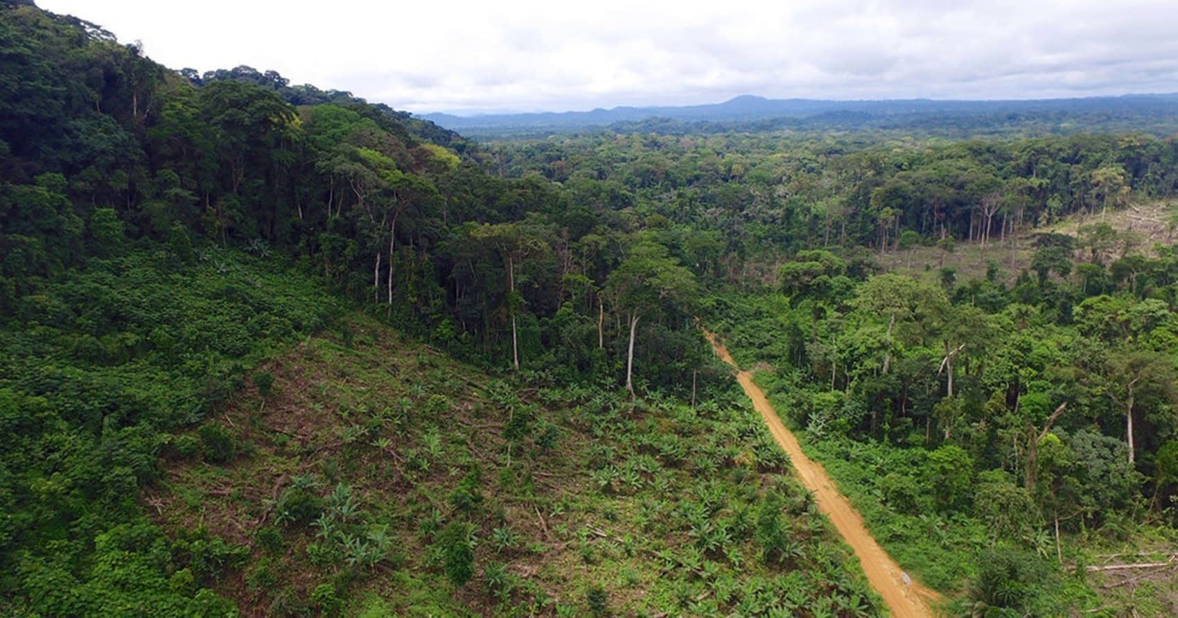 , Palm Oil Sourcing Should Be Disclosed to Consumers, Sustainability Study Recommends, TheCircularEconomy.com