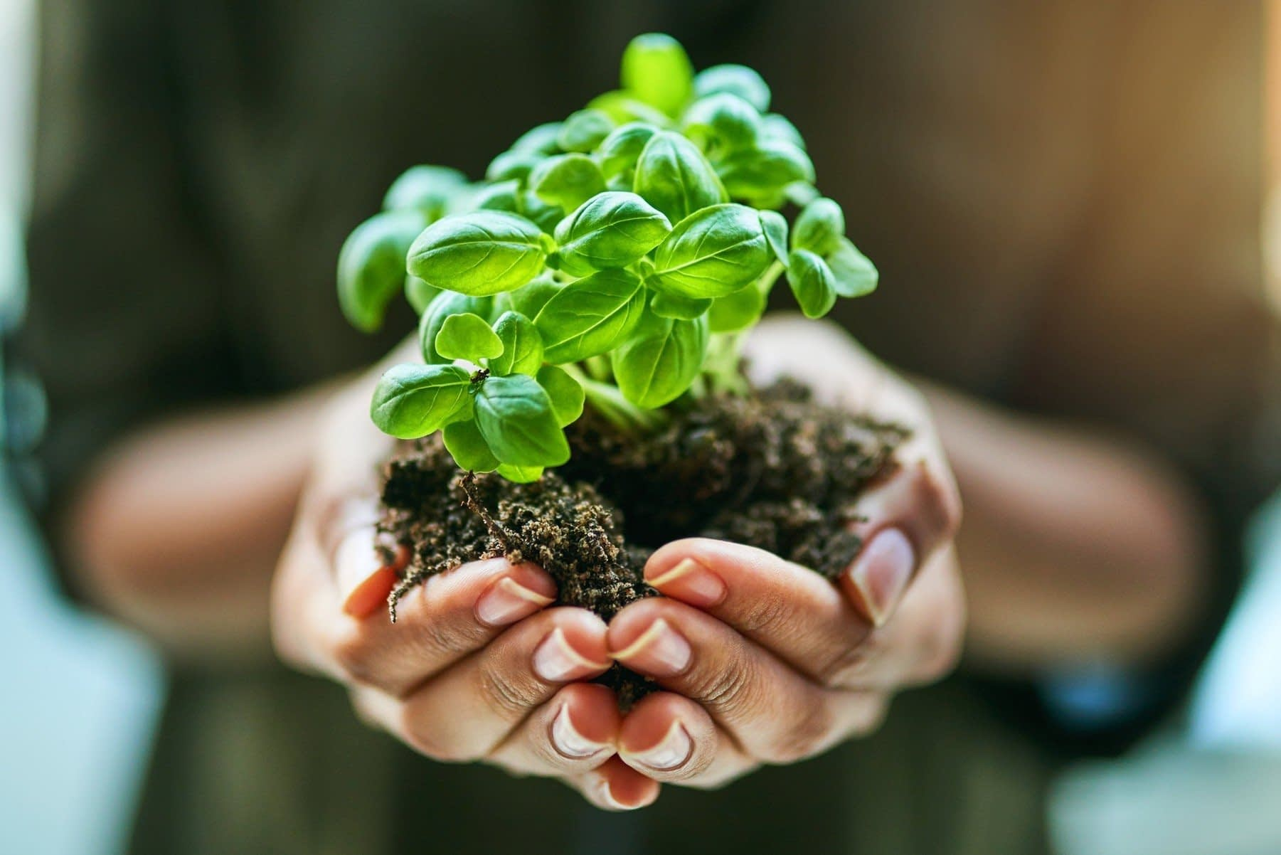 , Climate Change, Soil and Sustainability Help Humans Kiss The Ground, The Circular Economy