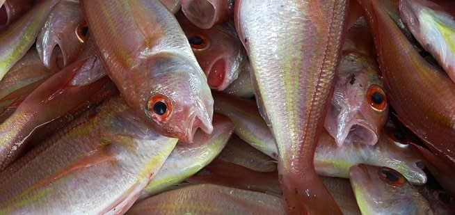 , Seafood consumers 'overwhelming concerned' about sourcing and sustainability, TheCircularEconomy.com
