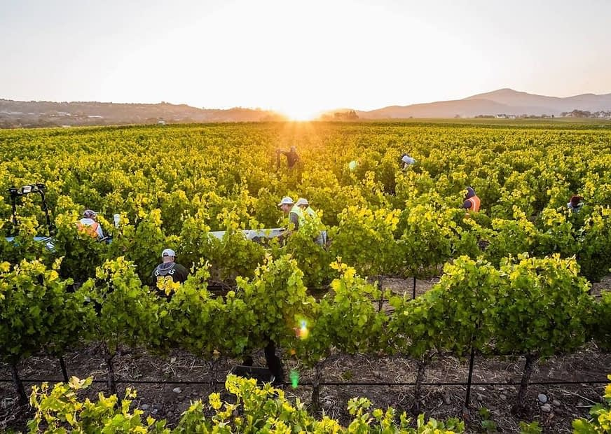 , How Sonoma, California wine country reached 100 percent sustainability, The Circular Economy