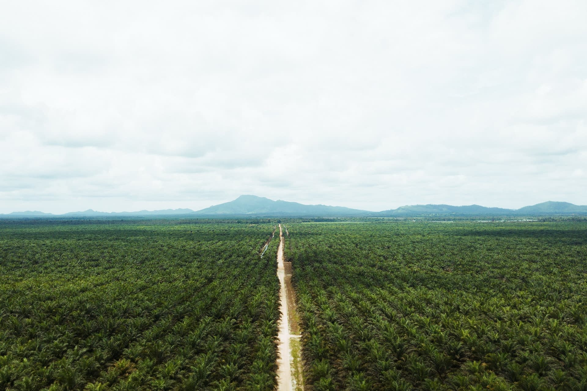 , Cargill engages US customers with Roundtable for Sustainable Palm Oil certified supplies, TheCircularEconomy.com