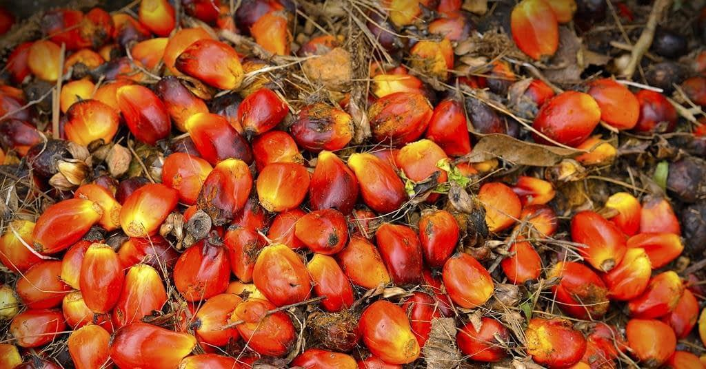 , Retailers and brands have made huge strides on palm oil sustainability – but can they now go even further?   Promotional Feature, The Circular Economy