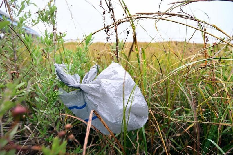 , Town of James Island is on its way to banning single-use plastic bags, TheCircularEconomy.com