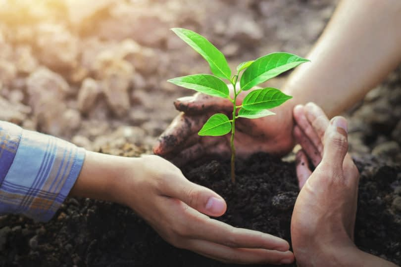 , Olam commits to sustainability with new loan, TheCircularEconomy.com