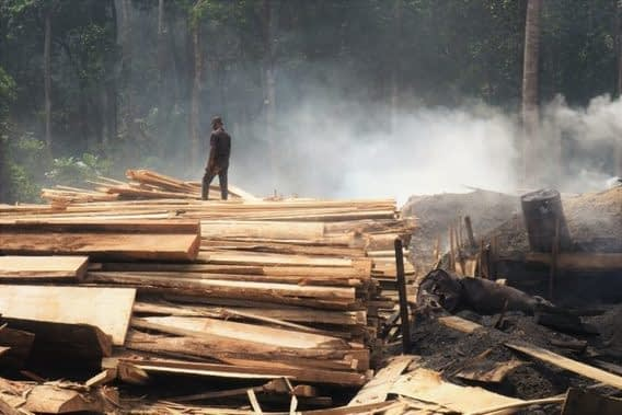 , Circular economy is the future of wood fuel production in Cameroon, TheCircularEconomy.com