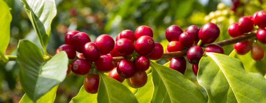 , Sustainable Coffee Sourcing at LDC || Louis Dreyfus Company, TheCircularEconomy.com
