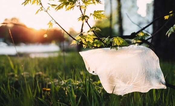 , Q&A: Sustainability manager on the benefits of a plastic bag ban, TheCircularEconomy.com