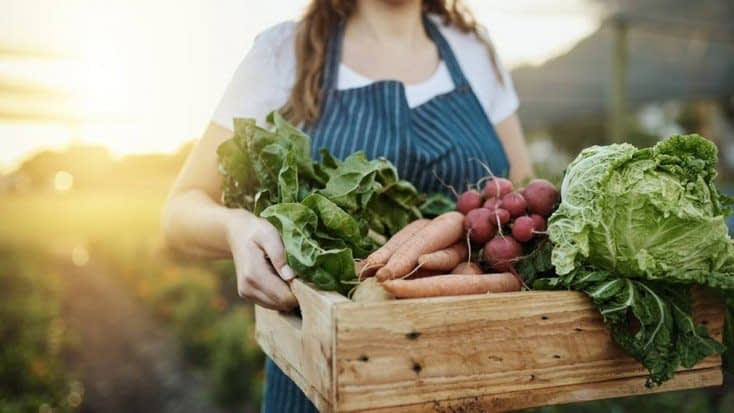 , Ensuring Sustainability in Food and Agriculture, TheCircularEconomy.com