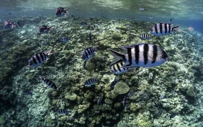 , Egypt Red Sea province to ban single-use plastic, The Circular Economy