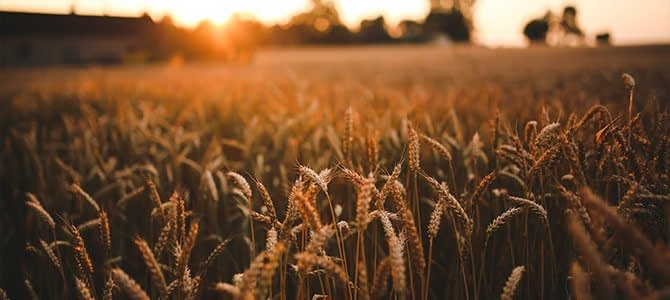 , How catalytic capital can support sustainable agriculture, TheCircularEconomy.com