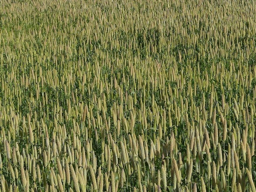 , How Millets sustained Mongolia's Empires, The Circular Economy