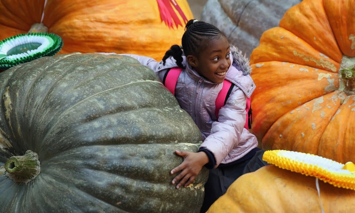 , From pumpkins to policies: engaging in sustainable food behaviour, The Circular Economy