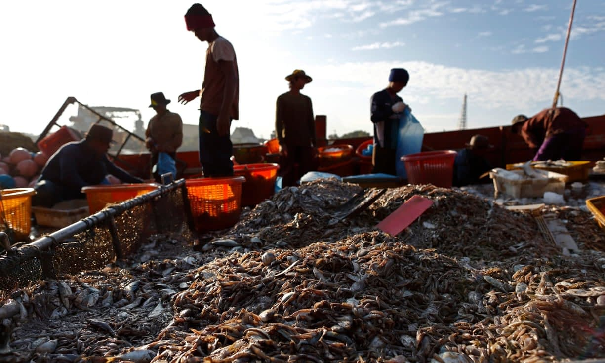 , Nestlé admits slavery in Thailand while fighting child labour lawsuit in Ivory Coast, The Circular Economy