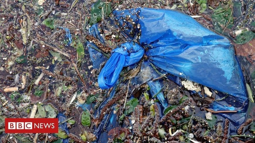 , Could this 'biodegradable bag' cut plastic pollution?, TheCircularEconomy.com