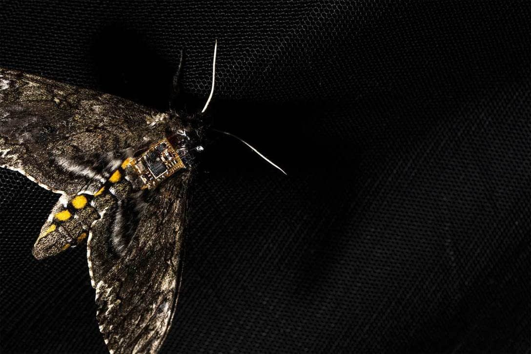 , Researchers harness moths to drop sensors from the sky, TheCircularEconomy.com